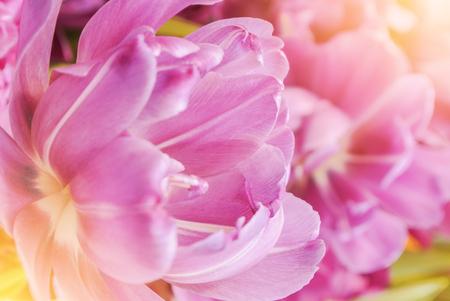 Close-up macro beautiful pink violet lush vibrant tulip petals, spring flowers on soft focus blurred toned floral background. Gentle spring romantic artistic postcard image desktop wallpaper. Stock fotó - 92840743