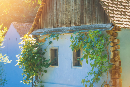 Old beautiful traditional romanian ukranian farm village house with white walls, tile roof, and grapevines with green grape growing by the walls and windows in warm sunlight on summer day. 免版税图像
