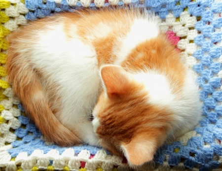 Kitten curled up and sleeping photo