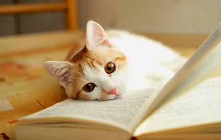 Red and white kitten lies quietly on the open book  photo