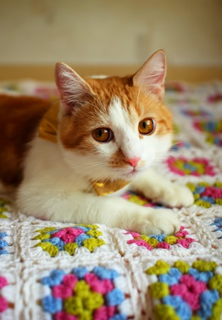 Cat lying on a colorful plaid  photo