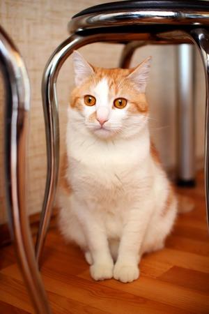 wonderment: House cat sits under a stool