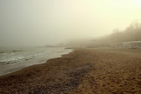 settles: Seashore and fog settles on the ground