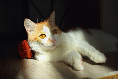 wonderment: Young cat lies on the floor of the room, lit by sunlight