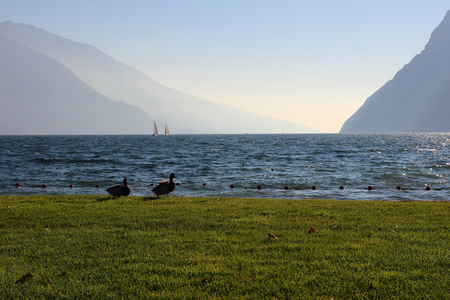 two ducks: Nice view of the lake surrounded by mountains and two ducks on the shore.