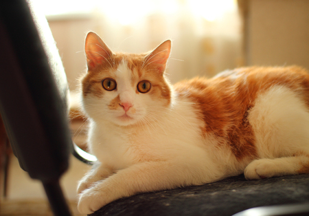 wonderment: Domestic cat sitting on a chair.