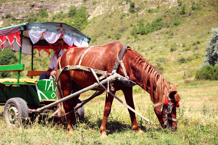 June 25, 2017, Moldova, Old Orhei, Horse harnessed to a tent with a coachman grazing on the lawn.
