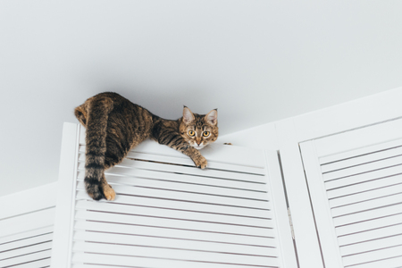 The cat is stuck and sits on the door of the closet near the ceiling of the house on a white background Imagens