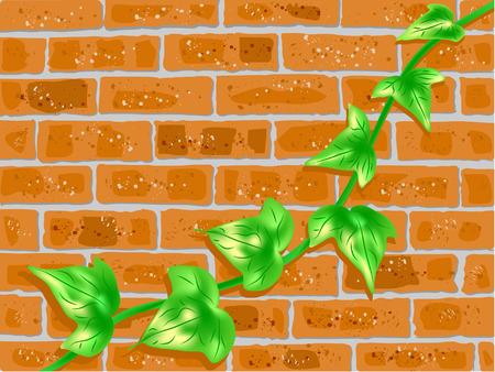 brick wall and green vine
