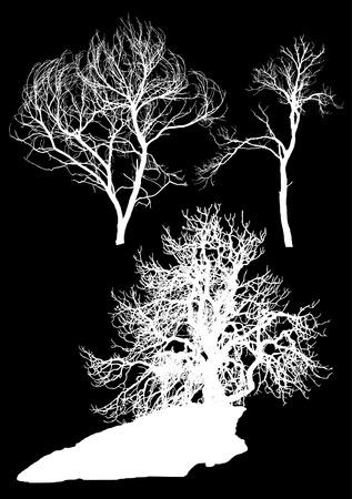 set of trees Illustration