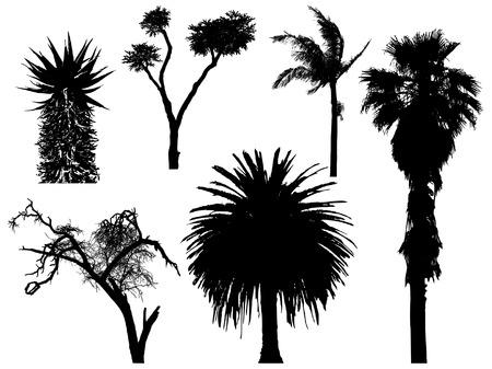 aloe: set of exotic trees Illustration