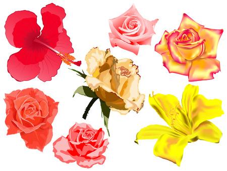 set of vector flowers Illustration