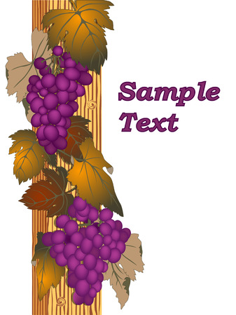 background with grape Stock Vector - 5974888