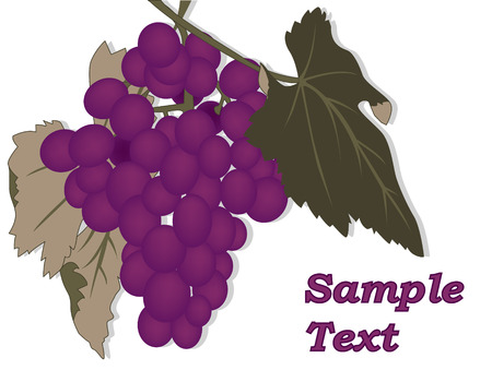 grape Stock Vector - 5974884