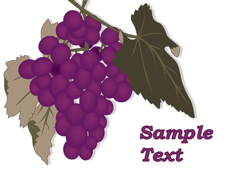 grape Stock Vector - 5974884