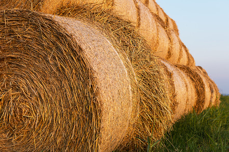 hayrick: Bales of Hay Rolled Into Stacks. Rolls of Wheat in the Grass. Bales of straw. Selective Focus.