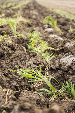 Arable Land Close Up. Freshly Plowed Field and Cultivated Green Meadow. Stock Photo