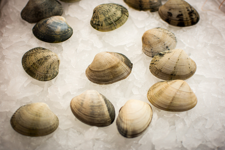 Pile of Fresh Seafood Clams on Ice Close Up Background. Healthy Eating. Stock Photo