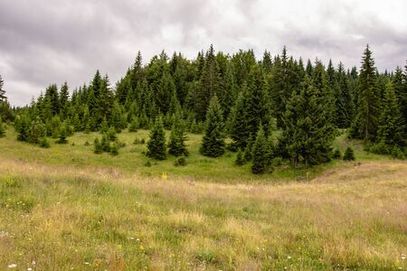 Green Meadow and Pine Trees Forest Landscape with Cloudy Sky. Tara National Park.