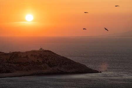 Golden sunset over coastal landscape and birds flying