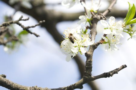detail of a flower branch in spring time Stock Photo