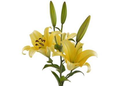 front view of yellow lily bouquet on white background Stock Photo - 7292795
