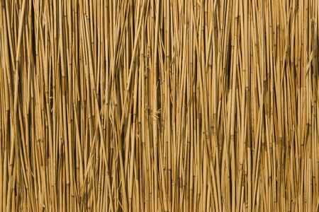 thatch: front view of cane dry, as a background