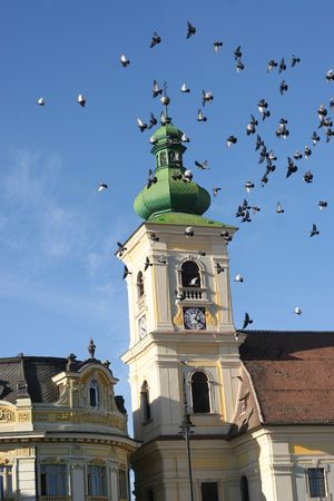 flying pigeons in front of old tower from sibiu photo