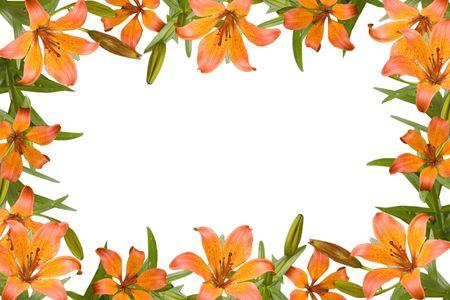 orange lily, flower frame with green leaves photo
