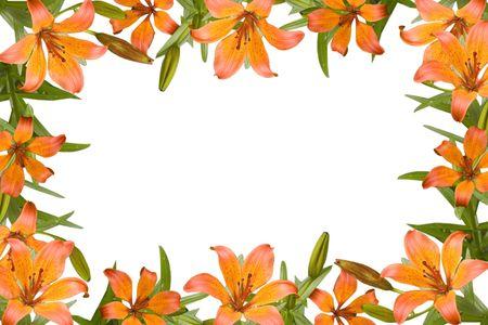 oranje lelie: Oranje lelie, bloem frame met groene bladeren
