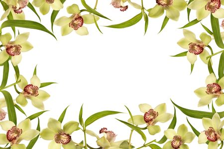 orchid flower frame and green leaves, spring time Stock Photo - 7670804