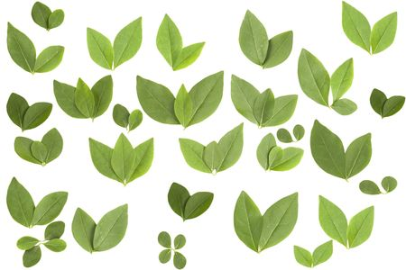 front view of different shape leaves on white background Stock Photo - 7670781