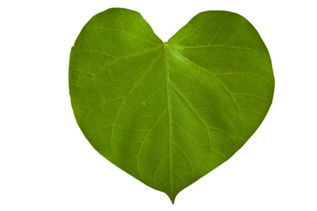 heart shaped: A heart shaped green leaf, symbolizing love for the environment