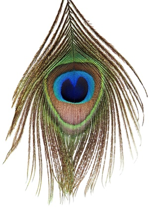 peacock eye: Detail of peacock feather eye on white background Stock Photo