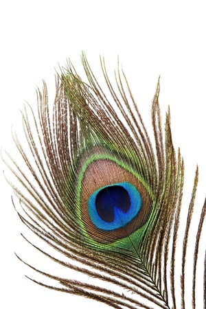 Detail of peacock feather eye on white background Stock Photo