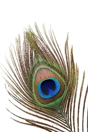 pluma de pavo real: Detalle del ojo de plumas de pavo real sobre fondo blanco