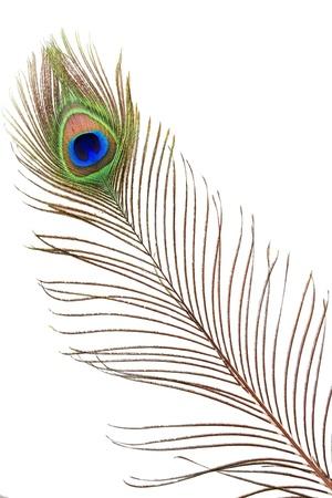plume blanche: D�tail de le ?il de plumes de paon sur fond blanc Banque d'images