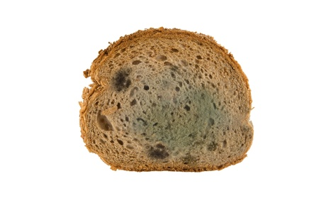 uneatable: slice of moldy bread isolated on white background Stock Photo