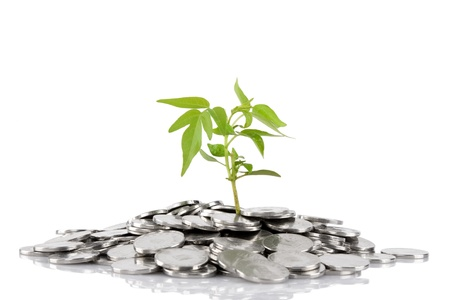grows: Green plant growing from the coins. Money financial concep