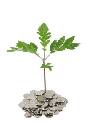concep: Green plant growing from the coins. Money financial concep