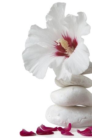 zen stones with flower on white background photo