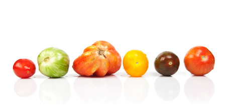 heirloom: wet tomatoes in a row isolated over white