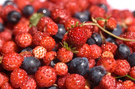 red and black wild berries, blueberries, strawberries