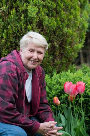 tulipan: starszy kobieta siedzi w ogrodzie w pobliżu tulipany na zielonym tle Zdjęcie Seryjne