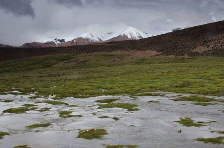 Lauca River, meadow and snowy peaks. Lauca National Park. Arica y Parinacota Region. Chile.