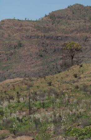 Cortijo de Inagua in The Nublo Rural Park. Foto de archivo