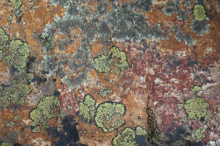 Rock colored with lichens and minerals. Integral Natural Reserve of Inagua. Gran Canaria. Canary Islands. Spain. Stock Photo