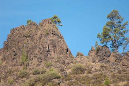 Cliff and Canary Island pine Pinus canariensis. The Nublo Rural Park. Aldea de San Nicolas de Tolentino. Gran Canaria. Canary Islands. Spain.