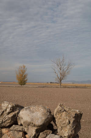 Trees in a plain in the Gallocanta Lagoon.