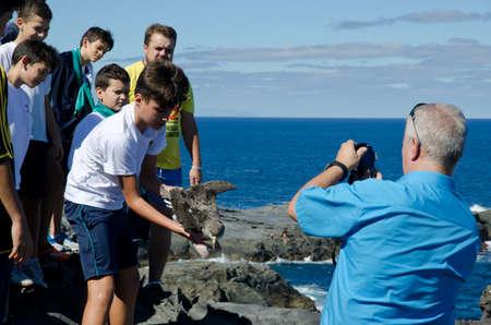 Las Salinas. Arucas. Gran Canaria. Canary Islands. Spain. November 5, 2015: boy releasing a young Corys shearwater Calonectris borealis.